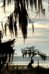Trees and spanish moss