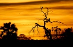 Selous sunset in Tanzania