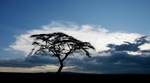 Acacia trees and a thunder storm  in the Serengeti, Tanzania