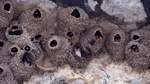 Cliff swallows 2