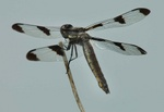 dragonfly 2