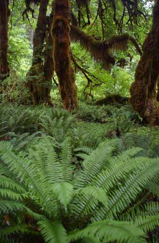 Hoe rainforest 5