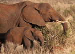 Elephant and baby at Tarangire park in Tanaznia
