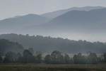 Cades Cove morning fog